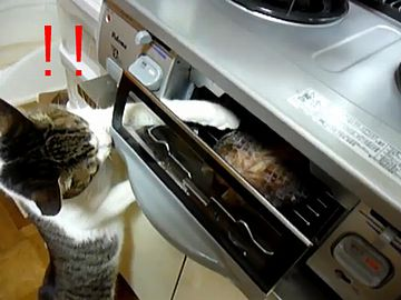 グリルに手を突っこむ猫。熱くないんですかね?