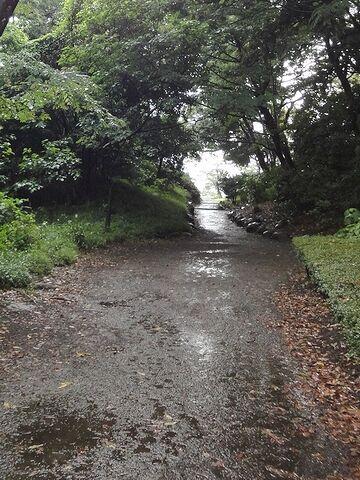園路は古く、雨が水溜まり