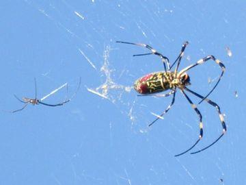 一つの巣に、オスメス、2匹いるわけです