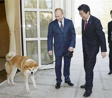 和顔の犬は、プーチンさんに秋田県が贈った秋田犬