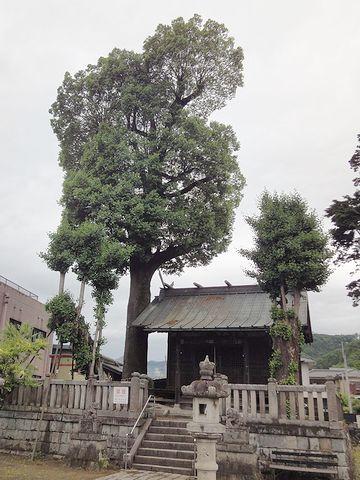 もう1本の木は、立派です