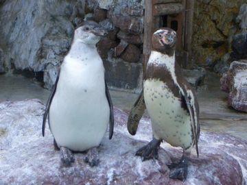 桂浜水族館のペンギン