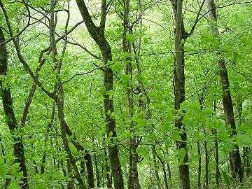 北海道に広く拡がる落葉広葉樹林