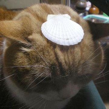 ますますもって帆立貝