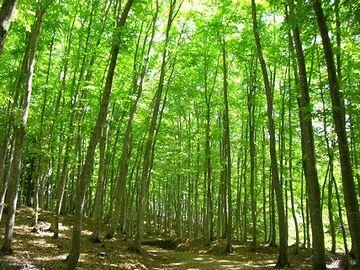 林の中では、株元まで陽があたりません