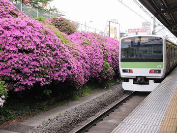 駒込駅のツツジ