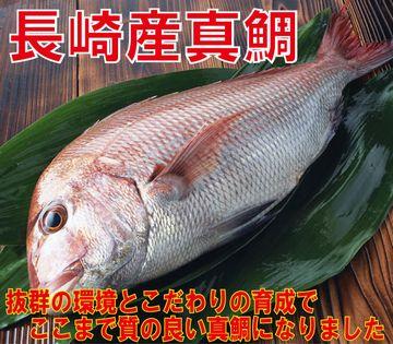 たらふく食べて、のんびり育った魚のほうが、ぜったい美味しいと思うな
