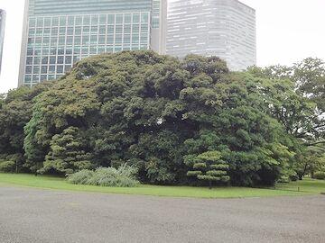 欲しいままに枝を広げた木
