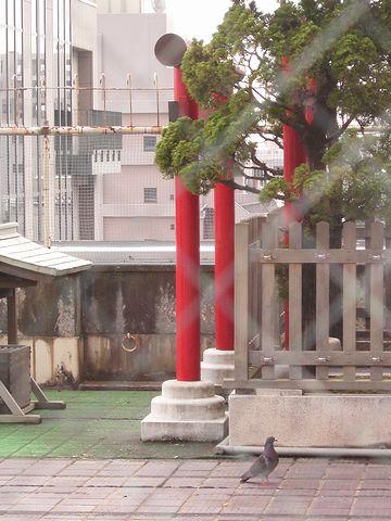 新潟大和の屋上・鳥居と鳩