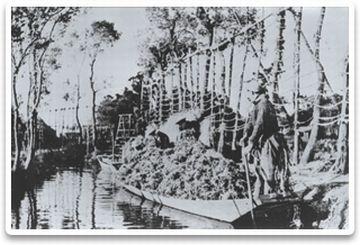 亀田郷内には100本を越える舟堀が縦横に走り、集落をつないでいました