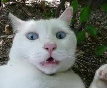 猫が、ペットボトル見て、たまげるんでしょ
