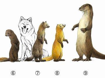 体格の比較