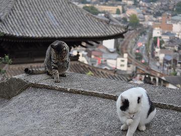 上から見下ろせる場所がたくさんあるのが、猫にとって住みやすいんでしょうか