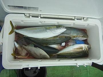 獲った魚を入れるクーラー?