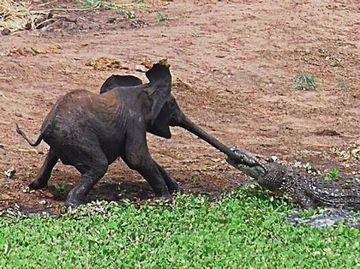 肉食獣のいる環境では、体の小さいものは不利。