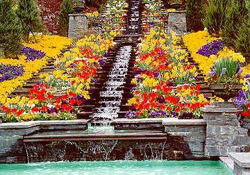花を摘みに行く