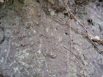 岩山の地肌