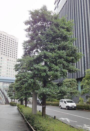 綺麗に保たれた街路樹