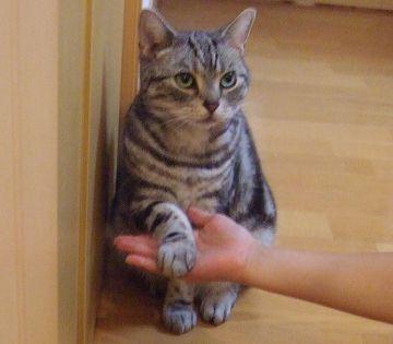 猫なんて、お手を仕込むだけでも一苦労ですよ