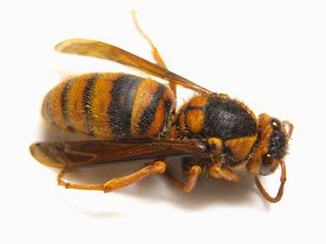 蜂が死んでました