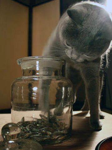 そんなの、猫しか食わんわ
