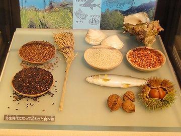 縄文と弥生の食生活