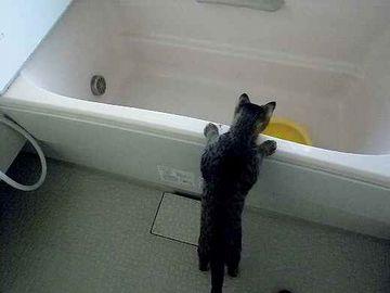 バスタブに、水溜めてある?