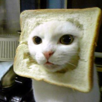 ネコは、米もパンも食べますよね
