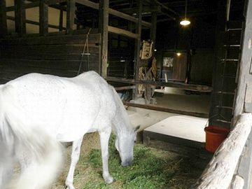 馬を、室内で飼ってた