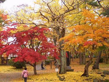 千秋公園・秋は、紅葉