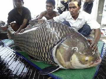 巨大魚と、命がけの戦い