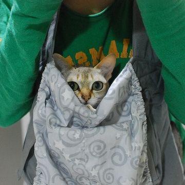 猫を胸の前の袋に入れて、散歩してる人
