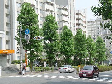 横浜市磯子区街路樹
