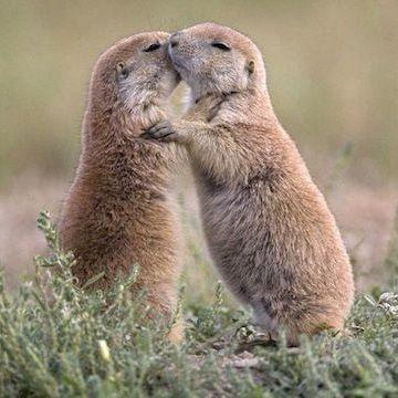 抱き合ってキスをしていたんです