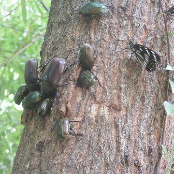 外人には、カブトムシもクワガタも、ゴキブリと同じにしか見えない