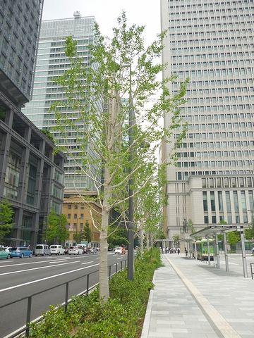 まだ植えられたばかりの街路樹