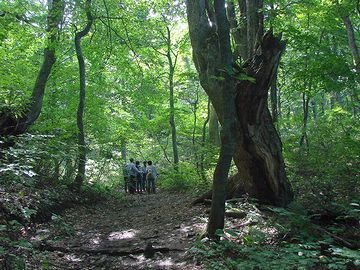 登録地とほとんど同じ状態の原生林を、目の当たりに出来るんです