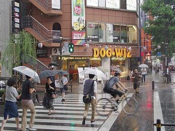このころは梅雨の真っ最中