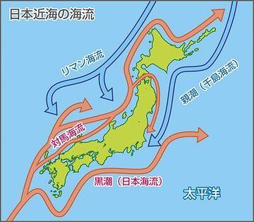 日本海側と太平洋側では、種の流れる方向が逆