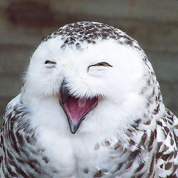 笑いは、万病に効き目あり