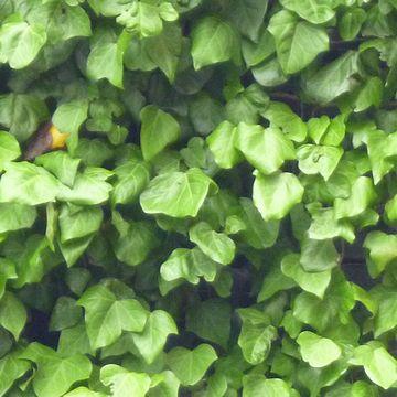 植物をズーム