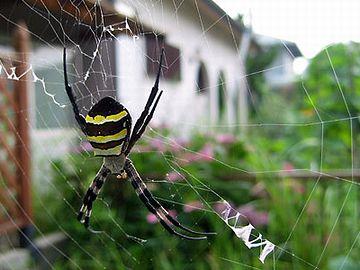 蜘蛛が巣食ってるって話