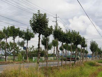 新潟市西蒲区門田の稲架木