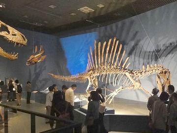 もう1頭の骨格標本
