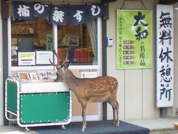 無料休憩する鹿