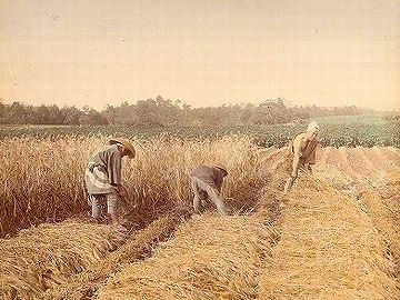江戸時代の農作業は、家族が力を合わせなければ出来ません