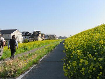 千葉県流山市。江戸川の堤防沿いのようです。