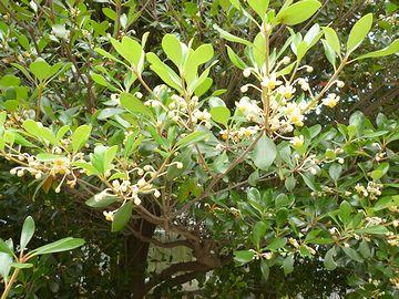 地味な花が咲いた木