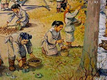 の実なんかは、女子供が森で集めてきます