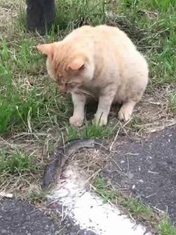 わたしは、生魚は食わん